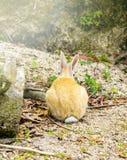 Задний взгляд кролика в земле Стоковое Изображение RF