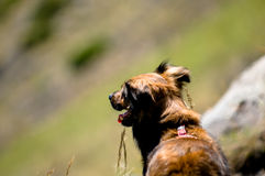 задний взгляд собаки Стоковое Фото