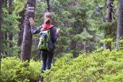 Задний взгляд тонкой атлетической белокурой туристской девушки hiker с ручкой a Стоковая Фотография RF