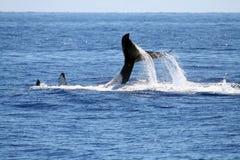 задний играя кит s Стоковые Фото