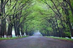 задняя проселочная дорога Стоковые Изображения RF