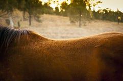 Задняя часть лошади Стоковые Фотографии RF