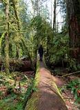 Задняя часть молодого человека staning на огромной ложе в Британской Колумбии парка Mcmillan стоковые фото