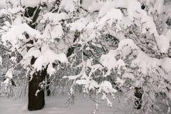 Задумчивое скучное утро зимы в ветвях снежного леса тонких молодых деревьев согнуто под обильным заволакиванием снега стоковое фото