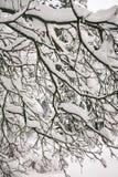Задумчивое скучное утро зимы в ветвях снежного леса тонких молодых деревьев согнуто под обильным заволакиванием снега стоковое фото rf