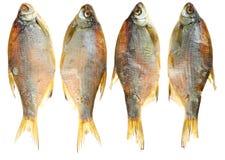 заедк мертвых сухих рыб пива солёная к Стоковое Изображение RF