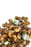 Зажаренная в духовке личинка цикады стоковые фото