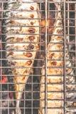 Зажаренная в духовке скумбрия рыб туши сварила на гриле, взгляд сверху, clo Стоковые Изображения