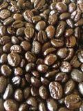 зажаренная в духовке темнота кофе фасолей стоковое изображение rf