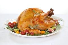 Зажаренная в духовке Турция на подносе над белизной Стоковые Изображения RF