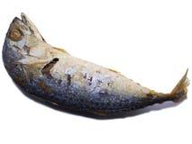Зажаренная скумбрия изолированная на белой предпосылке Стоковые Фото