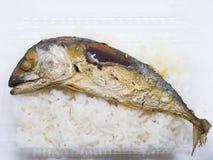 Зажаренная скумбрия при горячий изолированный рис Стоковое Изображение RF