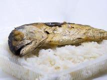 Зажаренная скумбрия при горячий изолированный рис Стоковое фото RF
