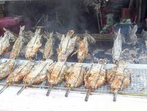 зажаренная трава рыб и соли и ингридиента варя machin крена Стоковое фото RF