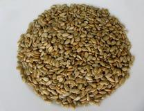 Зажаренные в духовке семена подсолнуха на белой предпосылке Стоковая Фотография