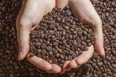 Зажаренные в духовке коричневые кофейные зерна держат в руках Стоковая Фотография