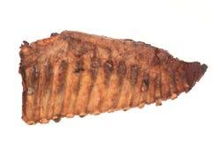 зажаренные в духовке нервюры свинины Стоковые Фотографии RF