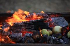 зажаренные в духовке луки Стоковое фото RF