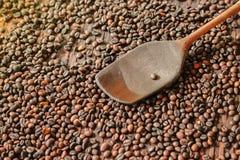 Зажаренные в духовке robusta кофейные зерна и деревянный флиппер в молотя корзине стоковые фотографии rf