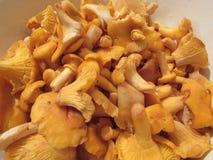 Зажаренные лисички mushrums стоковое фото