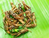 Зажаренные насекомые на зеленых лист Стоковые Фото