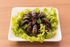 зажаренные насекомые Стоковые Изображения RF