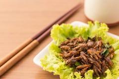 зажаренные насекомые Стоковое Изображение