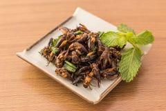 зажаренные насекомые Стоковая Фотография RF
