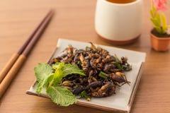 зажаренные насекомые Стоковое фото RF
