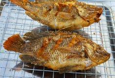 Зажаренные рыбы тилапии Стоковое фото RF