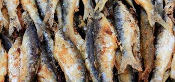 Зажаренные рыбы belvica от озера Prespa Стоковая Фотография