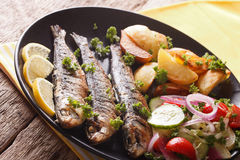 Зажаренные сардины с зажаренными в духовке картошками и свежим крупным планом салата Стоковые Изображения RF