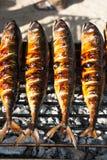 Зажаренные скумбрии на гриле стоковое изображение