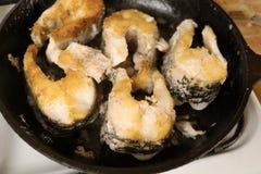 Зажаренные стейки рыб в лотке Рыбы щуки фрая большие в сковороде Стоковое Изображение