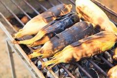 Зажаренные corns Стоковые Фото