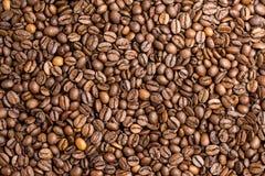 зажаренный в духовке кофе фасолей Стоковое Изображение