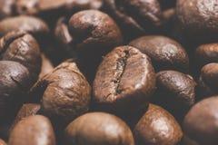 зажаренный в духовке кофе фасолей Стоковое Фото