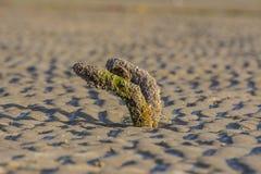 Зажаренный в духовке металл на пляже Стоковые Изображения RF