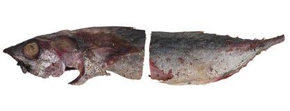 Зажаренный конспект тунца изолированный на белой предпосылке Стоковое Фото
