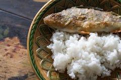 Зажаренный окунь с рисом Стоковая Фотография RF