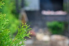 Зажаренный стейк варя на открытом барбекю стоковое изображение