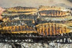 зажженные рыбы выкружки Стоковая Фотография RF
