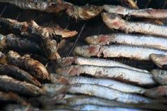 зажженные сардины Стоковое Фото