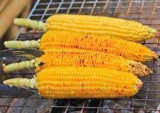 зажженные corns Стоковые Изображения RF