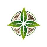 Заживление значок лист дерева корня Стоковое Фото