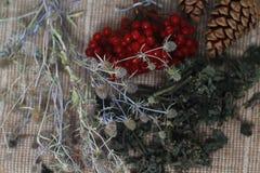 Заживление травы, divination Стоковые Изображения RF