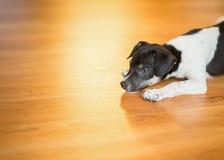 Заискиванный щенок стоковая фотография
