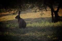 зайцы одичалые Стоковые Изображения