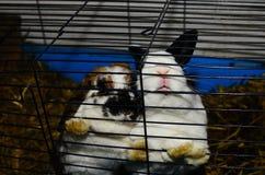 2 зайчика в клетке Стоковая Фотография RF