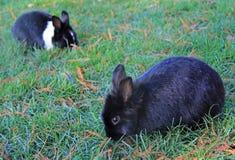 2 зайчика в парке Виченца Стоковая Фотография RF